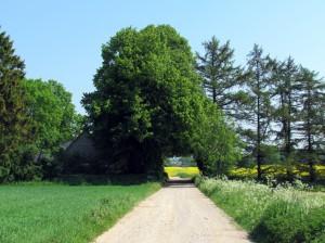 Skov Hastrup